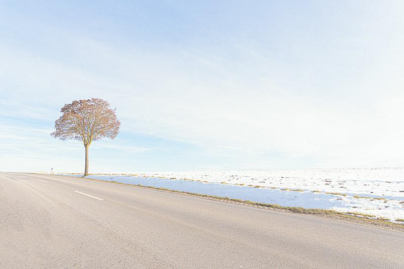Straßenbaum im Winter